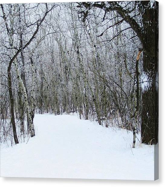 Manitoba Canvas Print - Trail To Somewhere...#trail #trees by Lucy Siciliano