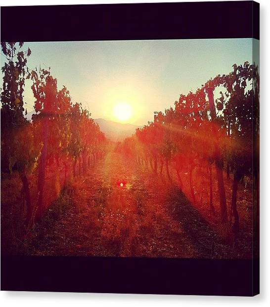 Vineyard Canvas Print - #tramonto #sunset #sun #vigneto by Simone Montemezzo