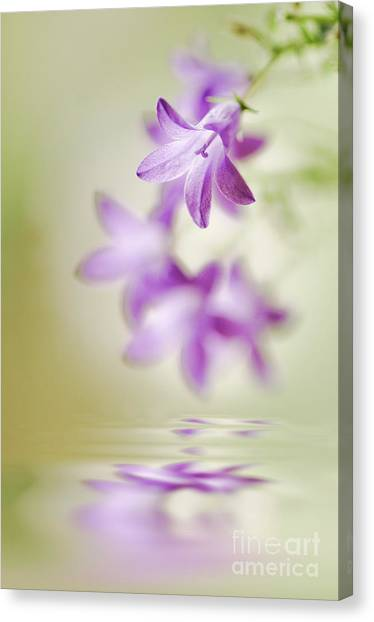 Tranquil Spring Canvas Print by Jacky Parker