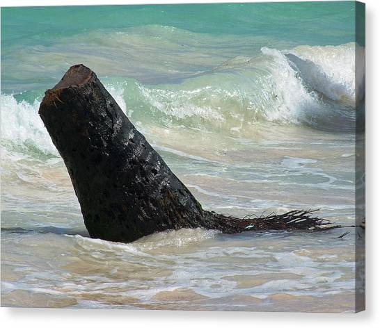 Travis In The Water Canvas Print by Fredrik Ryden