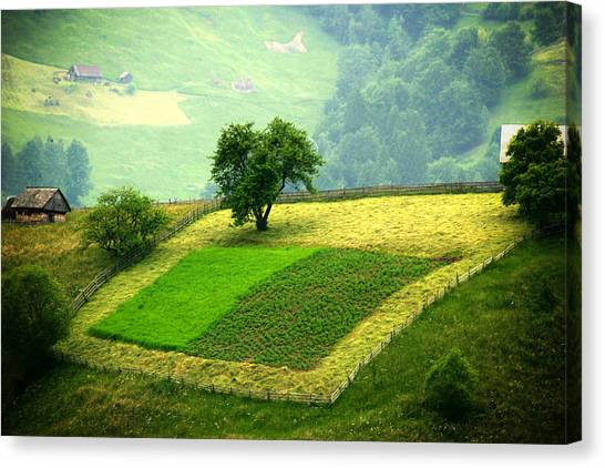 Tree And Field Canvas Print