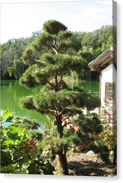 Tree Before Pond Canvas Print