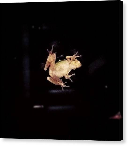 Frogs Canvas Print - Tree Frog On My Window. 🐸 #green by Leslie Drawdy ☀