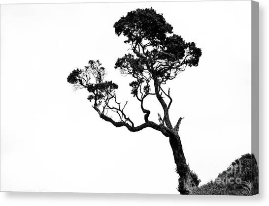 Tree In Black And White Canvas Print