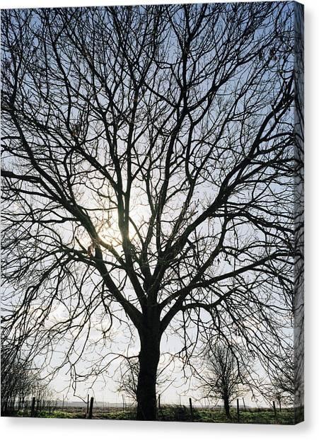 Tree In Silhouette Canvas Print by Michael Marten