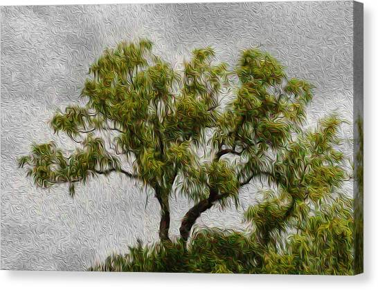 Tree In The Wind Canvas Print