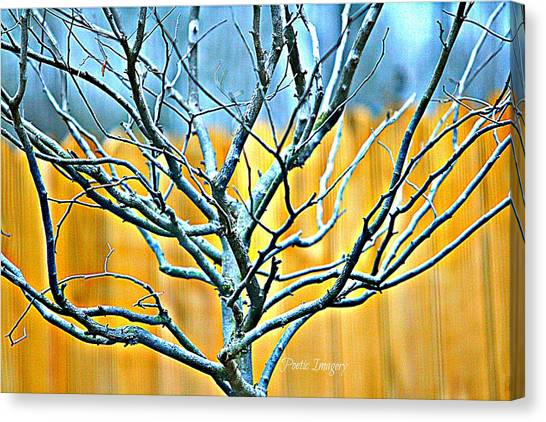 Tree In Winter Canvas Print by Debbie Sikes