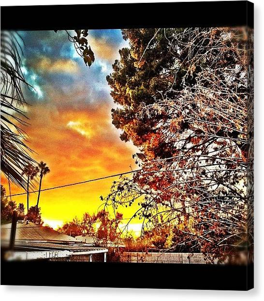 Basketball Teams Canvas Print - #tree #instagramaz #arizona #phoenix by CactusPete AZ