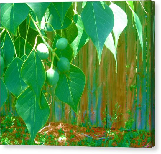 Tree Leaves Canvas Print by Juliana  Blessington