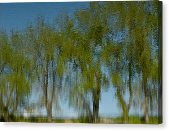 Tree Line Reflections Canvas Print