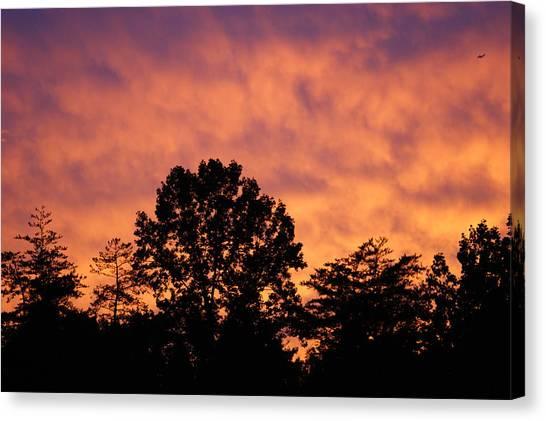 Tree Lined Skies Canvas Print