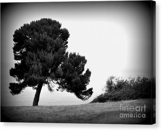 Tree Canvas Print by Nicky Dou