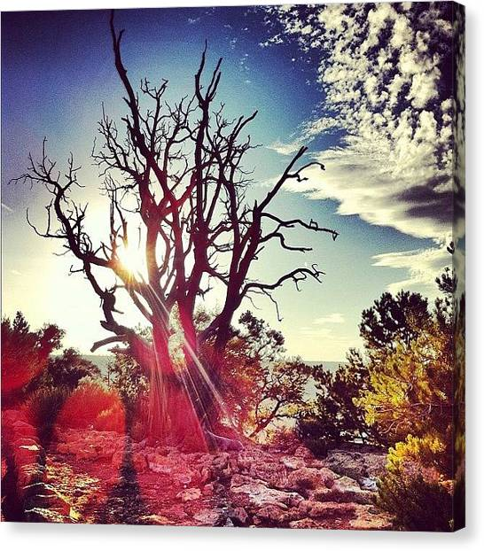 Grand Canyon Canvas Print - Tree Of Light by Megan Lacy