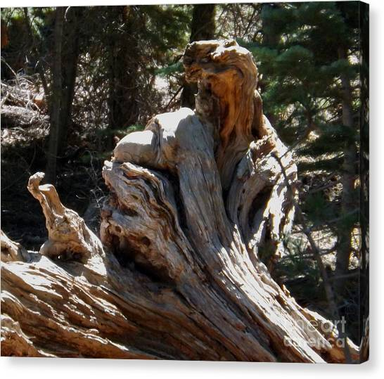 Tree Of Many Faces Canvas Print by Gary Brandes