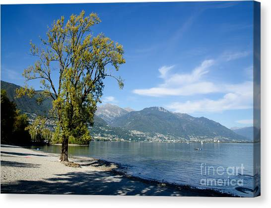 Tree On The Beach Canvas Print