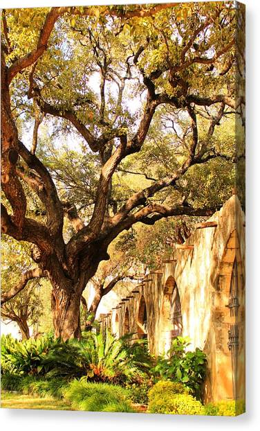 Tree Over Alamo Gardens II Canvas Print