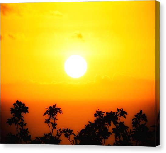 Tree-scape Sunset Canvas Print