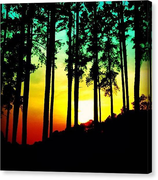 Rainbows Canvas Print - Tree Shadow by Katie Williams
