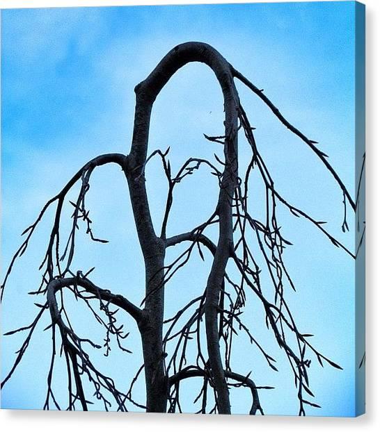 Yen Canvas Print - #tree #shape #sky #blue #0 by Kee Yen Yeo