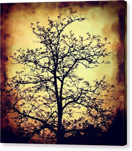 Halloween Canvas Print - Tree Silhouette by Claudia Schieve
