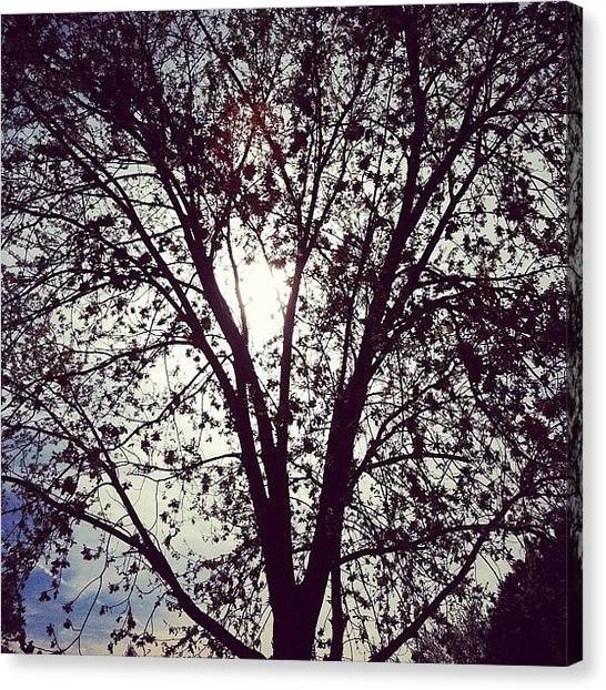 Back Canvas Print - Tree Silhouette by Sara Lovelace