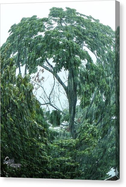 Tree Swirl Downpour Canvas Print