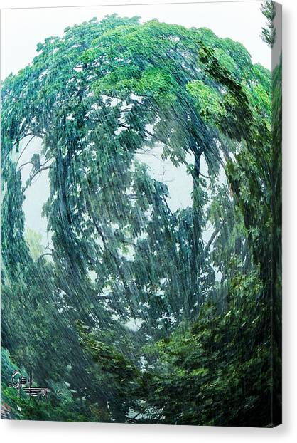 Tree Swirl Heavy Rain  Canvas Print