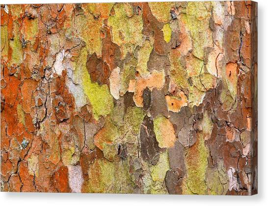 Tree Texture Canvas Print