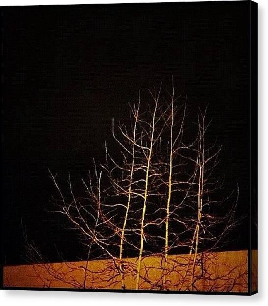 Seattle Canvas Print - #tree #trees #statigram #picoftheday by T Catonpremise