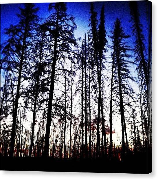 Tetons Canvas Print - #tree #wyoming #teton #sunrise #photo by Cesar D Romero