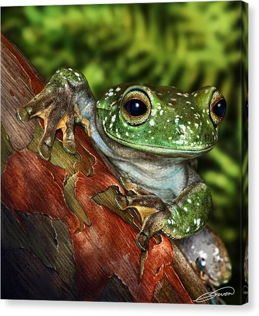 Treefrog  Canvas Print by Owen Bell
