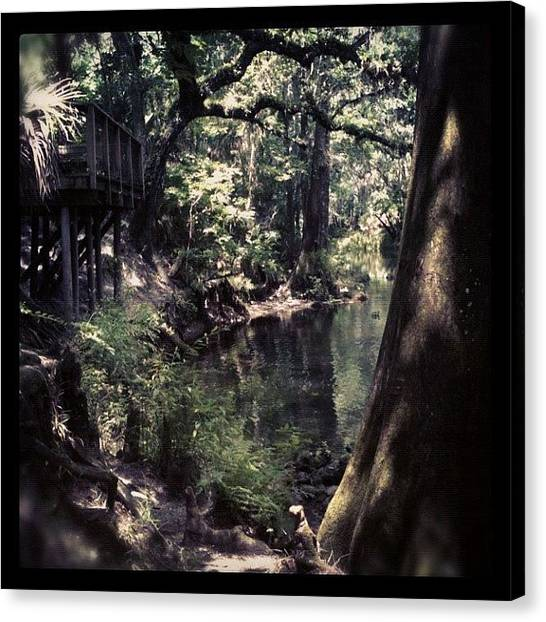 Swamps Canvas Print - Treehouse by Dustin Goolsby