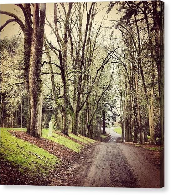 Pathway Canvas Print - #treelinedstreet #pathway #morning by Karen Clarke