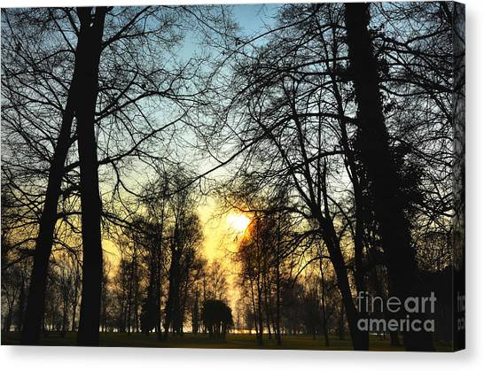 Trees And Sun In A Foggy Day Canvas Print