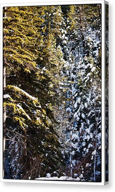 Trees In Taos Village Canvas Print by Lisa  Spencer