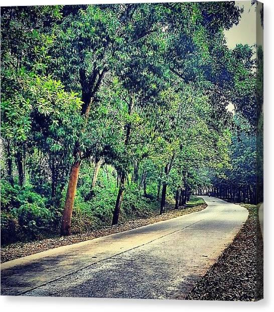 Shakira Canvas Print - #trees #roads #where by Inas Shakira