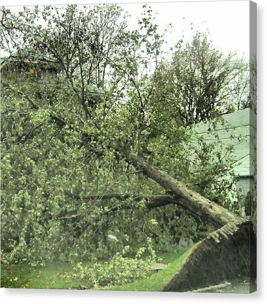 Hurricanes Canvas Print - #trees #wires And #hurricanes Don't by Crook Bladez
