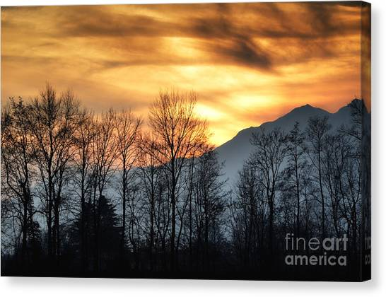 Trees With Orange Sky Canvas Print