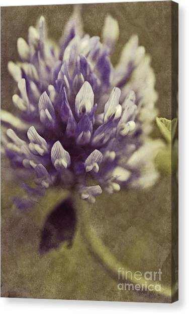 Clover Canvas Print - Trefle En Solo - S03bt04 by Variance Collections