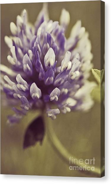 Clover Canvas Print - Trefle En Solo S03b by Variance Collections