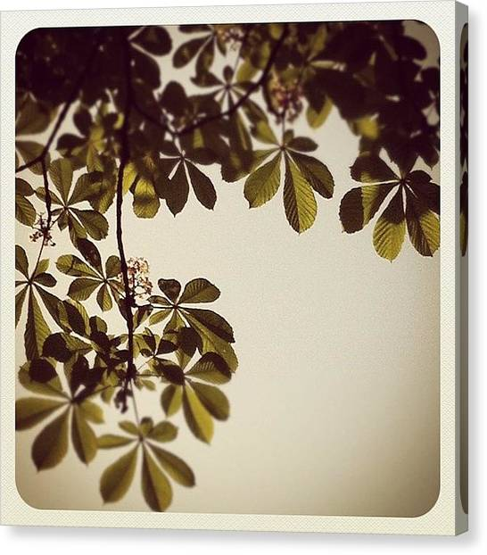 Lucky Canvas Print - #trefoil #garden #tree #instagood by Pinar Unal