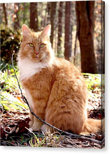 Manx Cats Canvas Print - Trey In The Woods by Kathleen Horner
