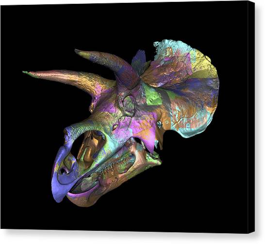 Triceratops Dinosaur Skull Canvas Print by Smithsonian Institute