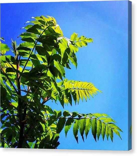 Ontario Canvas Print - Tropic Ontario. #lookstropical by Jess Gowan