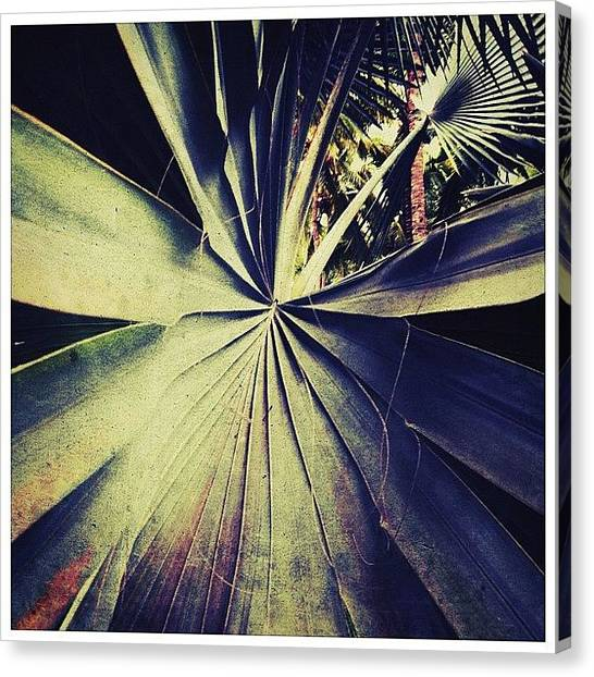 Mexican Canvas Print - Tropical Leaf by Natasha Marco