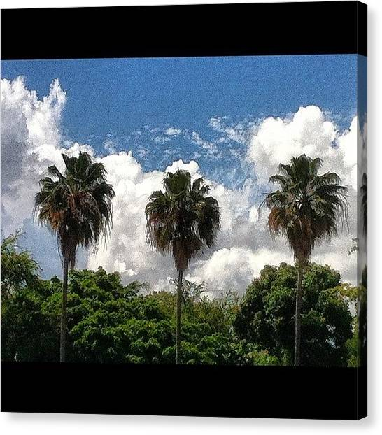 Palm Trees Canvas Print - Tropical Spot by Luis Alberto