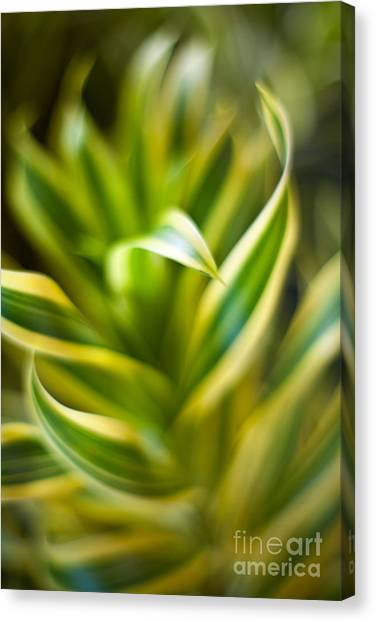 Tropical Plant Canvas Print - Tropical Swirl by Mike Reid