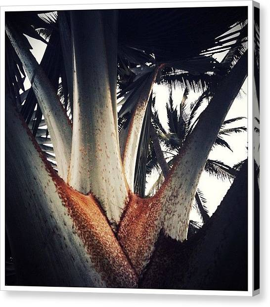 Mexican Canvas Print - Tropical Trees by Natasha Marco