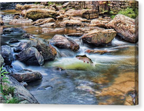 Trout Stream Canvas Print