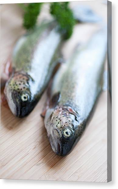 Trout Canvas Print - Trouts by Carlo A